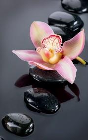 Joss Massage Olympia Thai