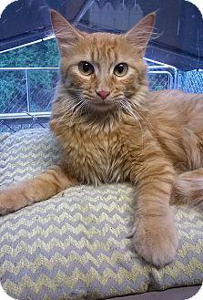 Cartels Tn Germantown Kitty Ts Kat