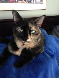 Philadelphia Kitty Licker