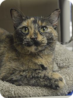 Germantown Tn Ts Kitty Kat