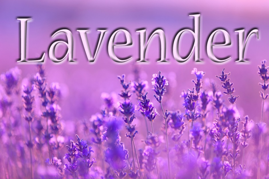 Ocan The Lavender Love Leilalove
