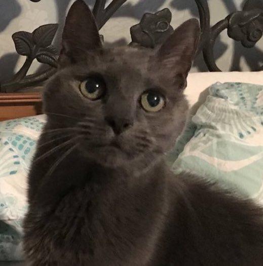 Target Licker Philadelphia Kitty